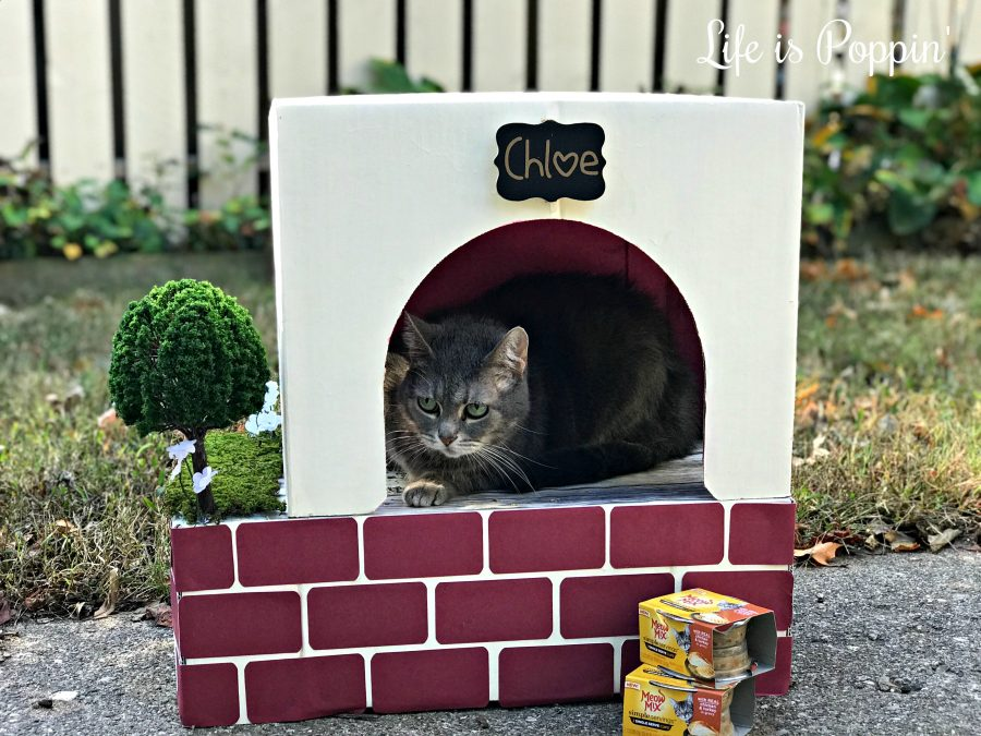 Cardboard-Kitty-Condo