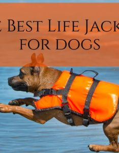 also the best life jackets for dogs rh lifejacketpro