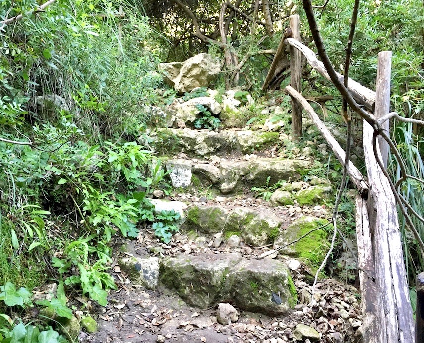 Rocky path going downhill with green vegetation on the side