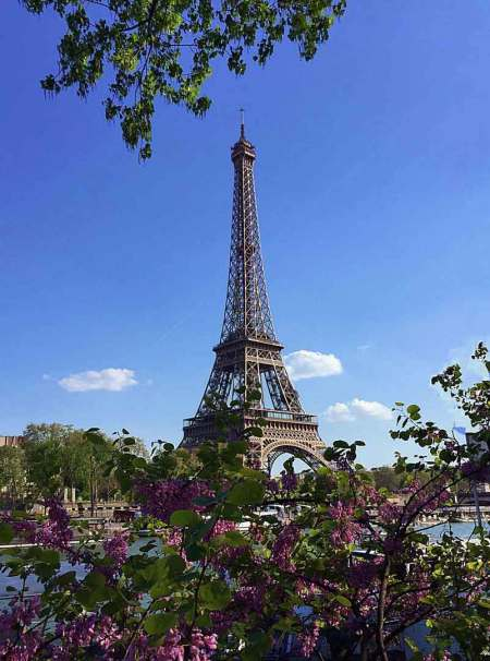 the Eiffel Tower seen through purple flowers and over the river Seine