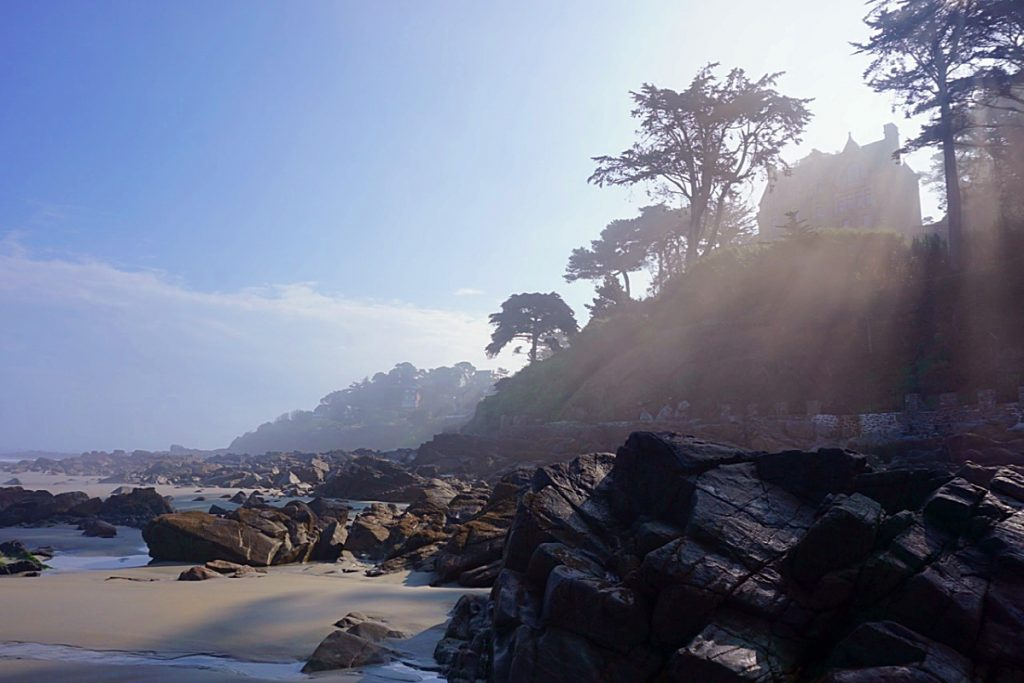 Sunlight shining through the trees and highlighting the beach rocks below