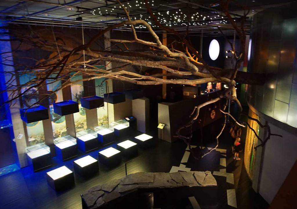 The exhibition room - in the ceiling are tree branches. There are 10 display boxes on the ground floor and there are small lights in the ceiling representing stars. The centre and exhibitions show many details of the viking kings and other Norwegian history