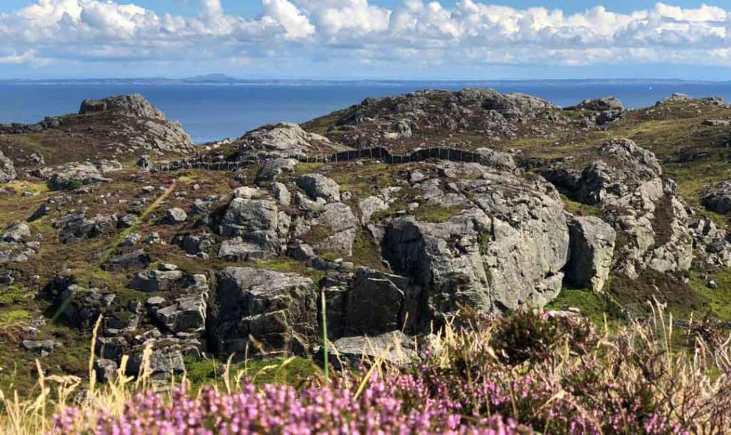 pink heather in the foreground with craggy rocks in the middle and the ocean in the background