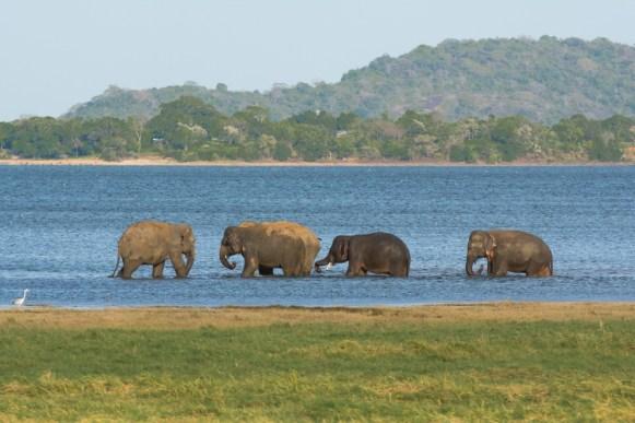 Sri Lanka (22)