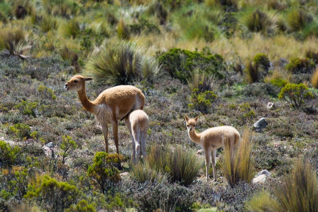 Colca Canyon, Peru (7)