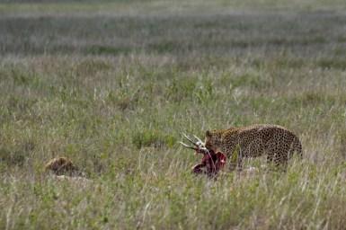 Tanzania, Serengeti (2)