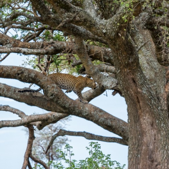 Tanzania, Serengeti (36)
