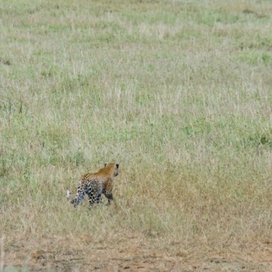 Tanzania, Serengeti (37)