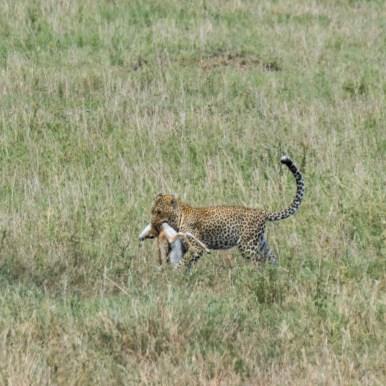 Tanzania, Serengeti (39)