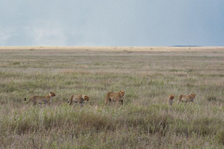 Tanzania, Serengeti (4)