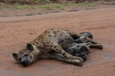 Tanzania, Serengeti (59)