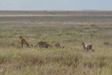 Tanzania, Serengeti (6)