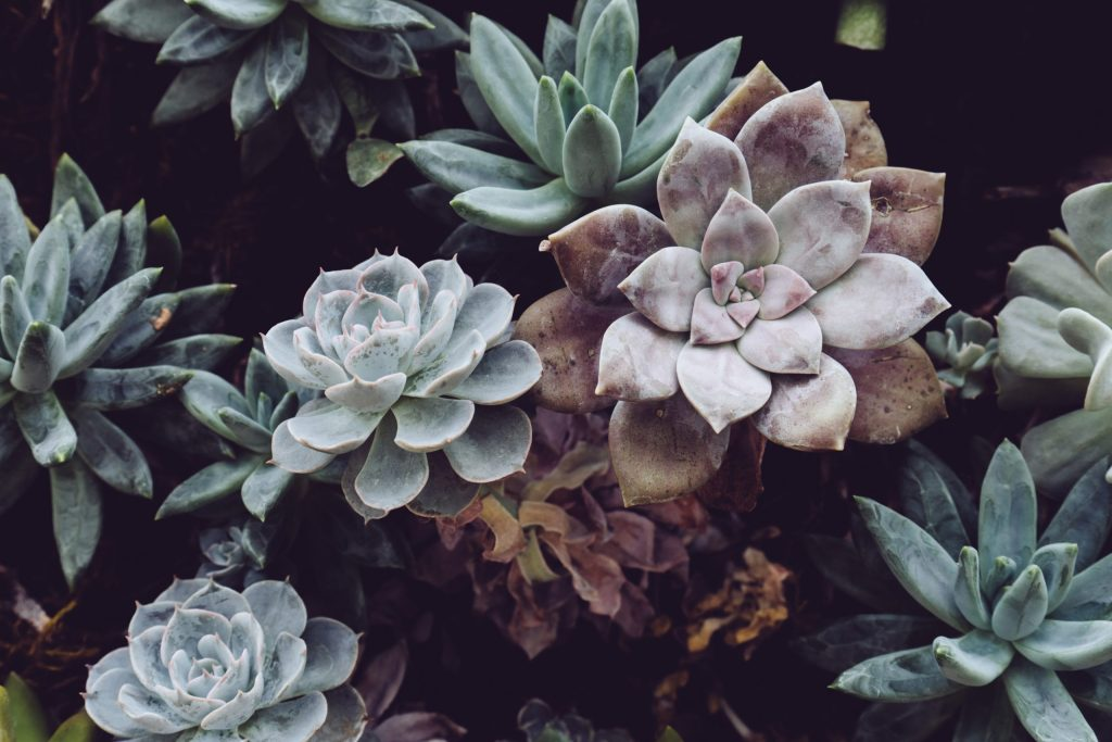 Succulents arranged in a pretty pot can be a meaningful gift idea for someone who loves plants.
