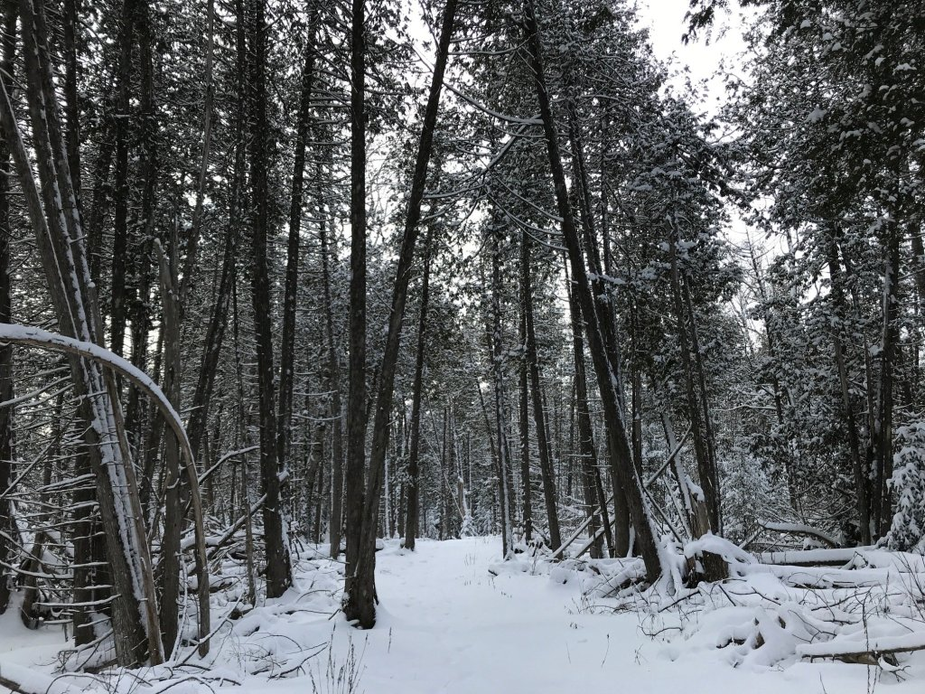 A snowy trail in Ecotat Gardens & Trails in Hermon, Maine.