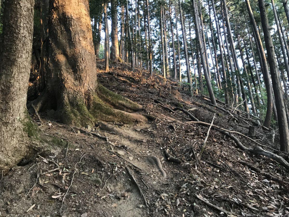 朝日に照らされる天王山