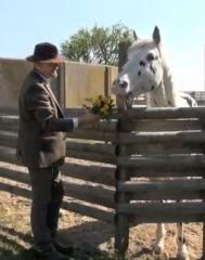 Hugin, the blind Knabstrupper stallion, is treated to some tasty flowers for his birthday by Bent Branderup.