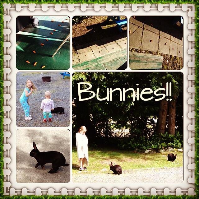 Wild Bunnies!! Girls were in animal heaven