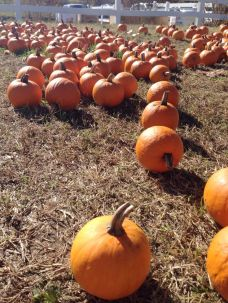 pumpkinfarm6
