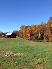 pumpkinfarm8