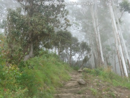 Way to Dolphin's Nose