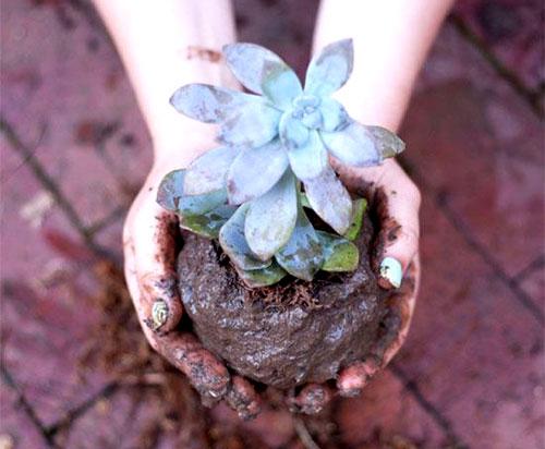 мини сад своими руками