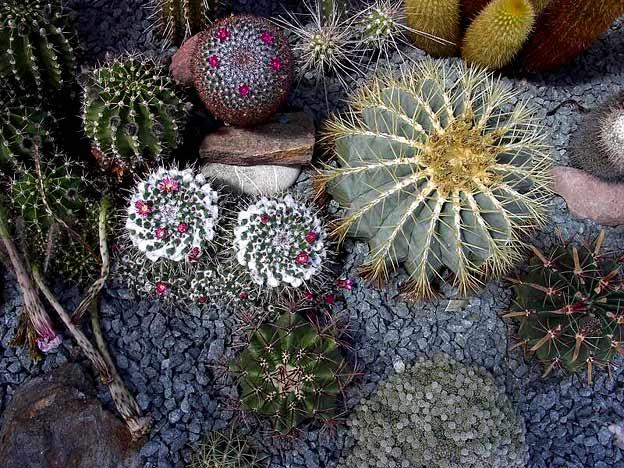 композиция с кактусами своими руками