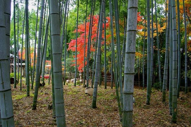 Киото ботанический сад японский сад заросли бамбука