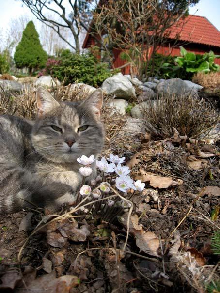 кот весна на даче
