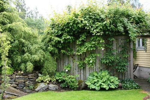 Красивый ландшафтный дизайн сада