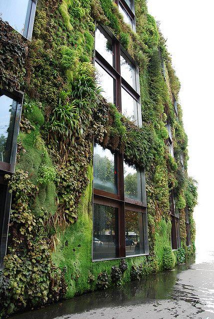 Вертикальное озеленение фасада лианами