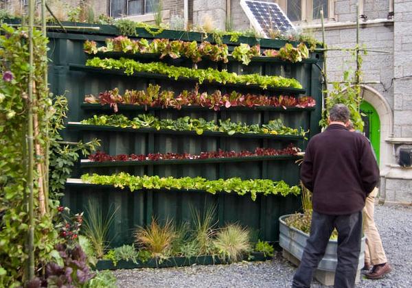 Вертикальное озеленение в лотках