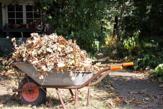Использование сухих листьев на огороде