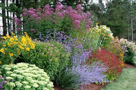Красивые яркие цветы на даче