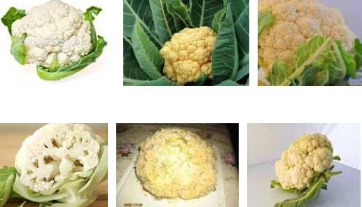 Цветная капуста - выращивание и уход