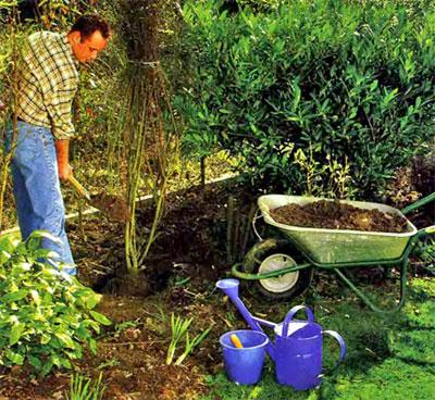 как правильно посадить дерево