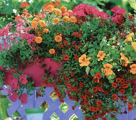 Ампельные цветы и растения в озеленении балконов и террас 4