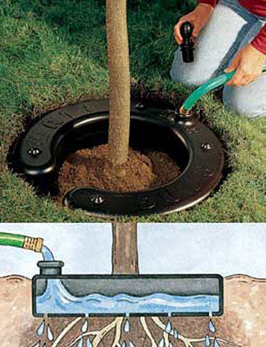 Идея капельного полива саженца плодового дерева