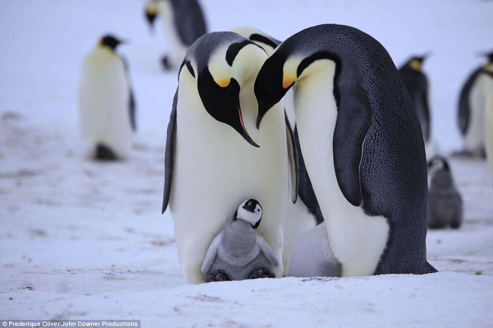 penguin-experiment-robotic-birds-1