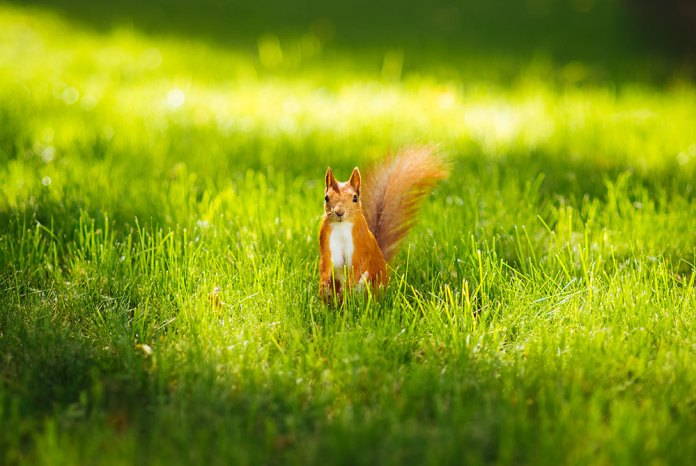 ", Squirrel contributes to the ""regeneration"" of the ecosystem"