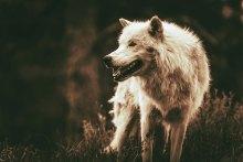 , Τα 5 πρώτα ζώα που εξημερώθηκαν από τον Άνθρωπο