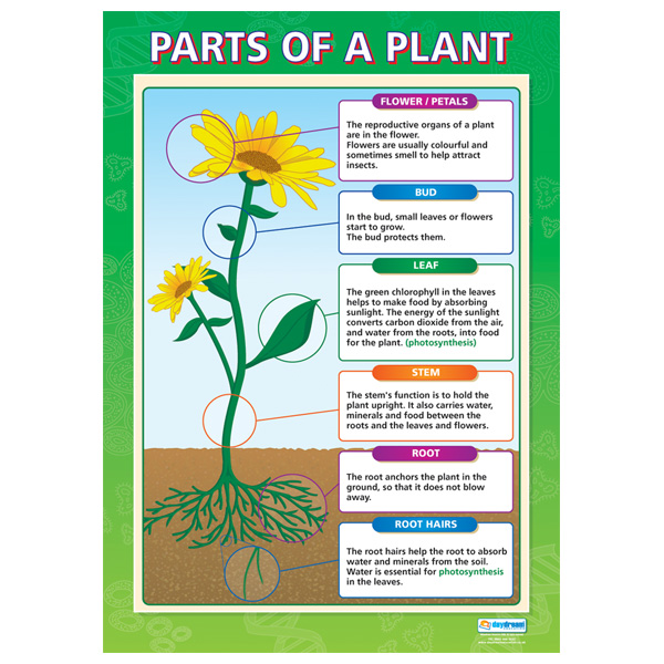 parts of a flowering plant diagram seat ibiza mk4 wiring the basic structure lifeofaplant reprinted from rapid education by