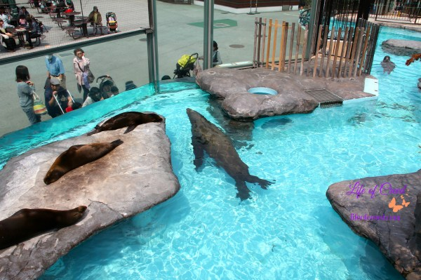 seals, Ueno zoo, tokyo, japan