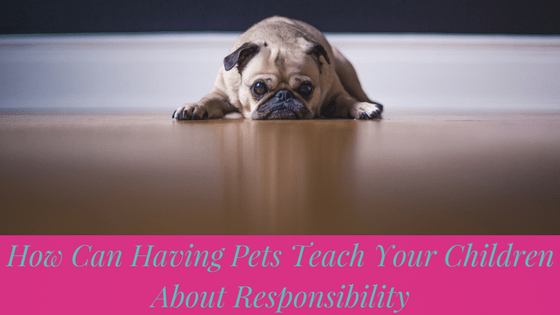 How Can Having Pets Teach Your Children About Responsibility