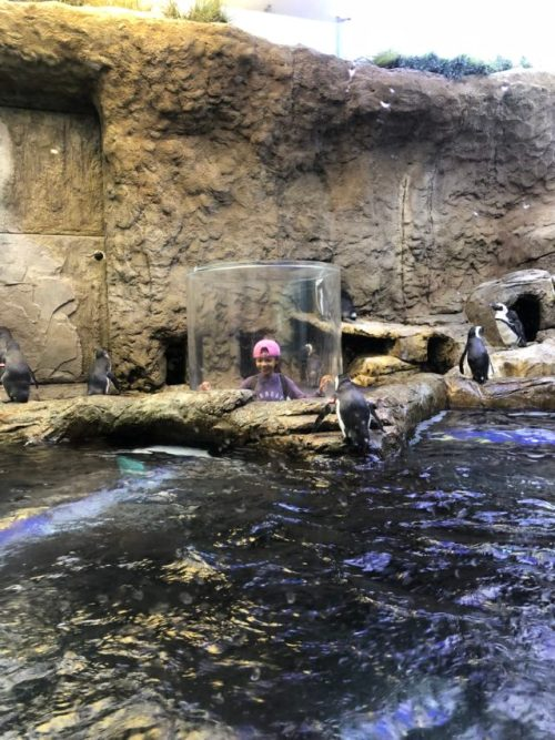Charmingly CJ checking out the penguins at the Ripley's Aquarium of the Smokies