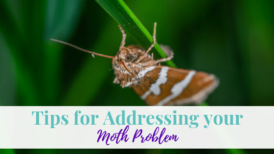 Tips for Addressing Your Moth Problem