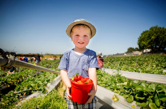 Kid in a strawberry patch