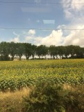 Sunflower fields from the window of our train from Lyon to Toulouse.