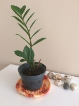 My potted plant :)