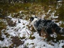 Wheeeeeeeee!!! Snow running!!!
