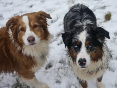 Serious dogs...!